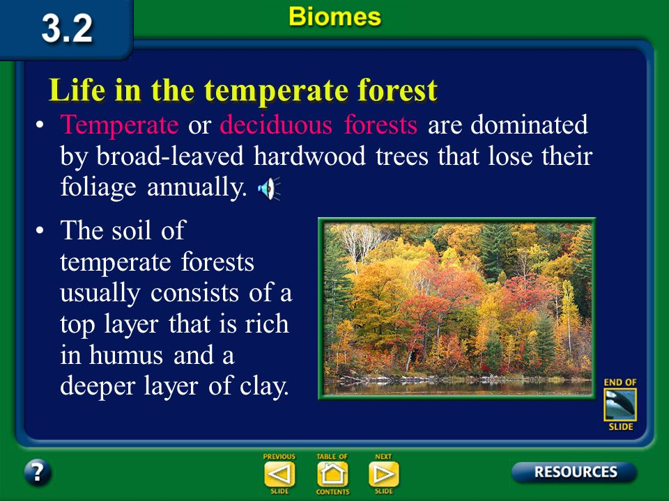 Section 3.2 Summary – pages 70-83 Life in the temperate forest When precipitation ranges from about 70 to 150 cm annually in the temperate zone, tempe