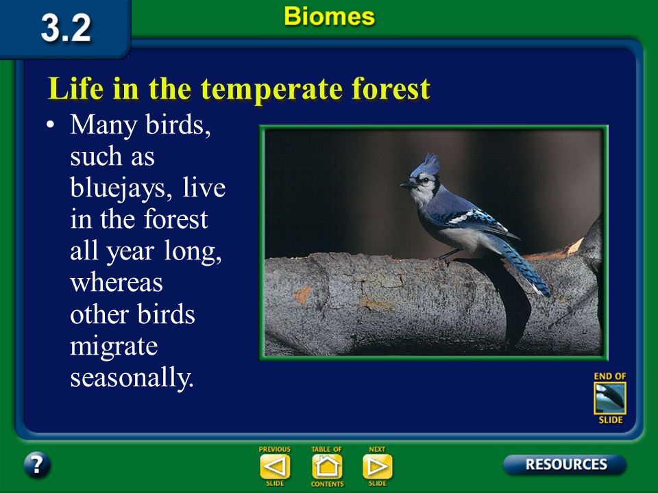 Section 3.2 Summary – pages 70-83 The animals that live in the temperate deciduous forest include squirrels, mice, rabbits, deer, and bears. Life in t