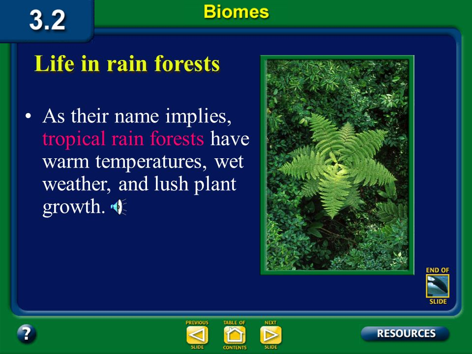 Section 3.2 Summary – pages 70-83 Life in rain forests Temperate rain forests are found on the Olympic peninsula in Washington state and in other plac