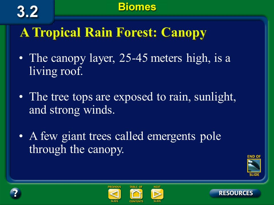 Section 3.2 Summary – pages 70-83 One reason for the large number of niches in rain forests is vertical layering. Rain forests receive at least 200 cm