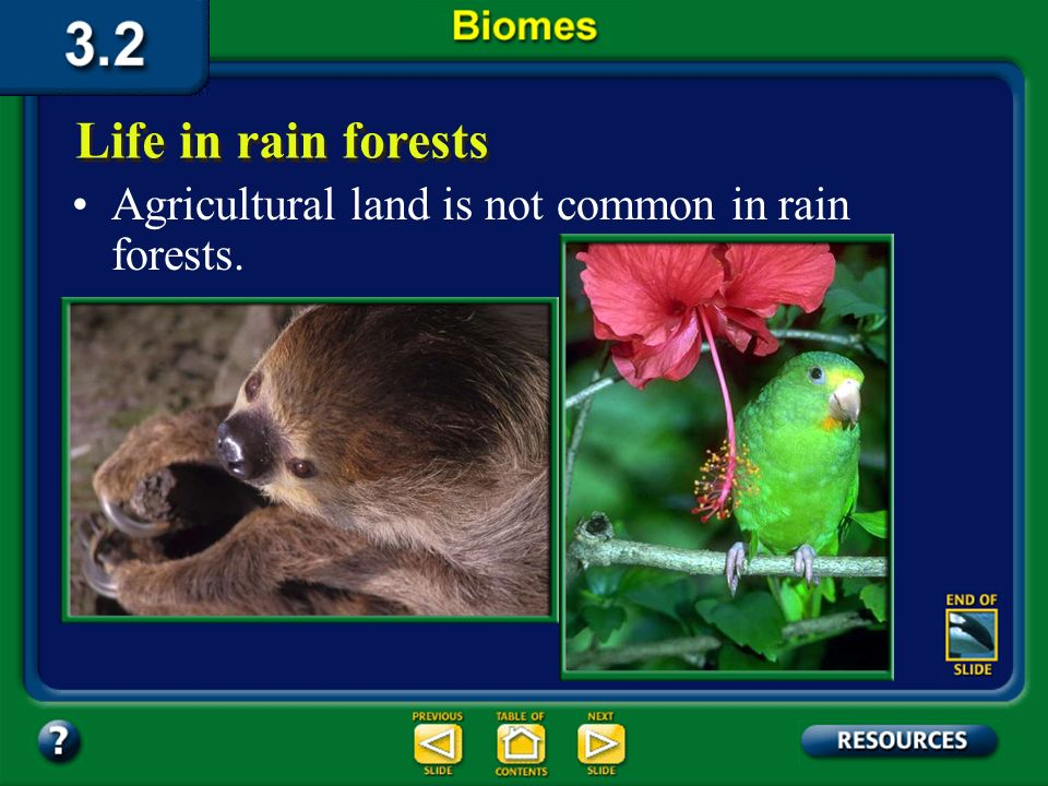 Section 3.2 Summary – pages 70-83 Life in rain forests Some rain forest plants are important sources of medicinal products and hardwood trees and have