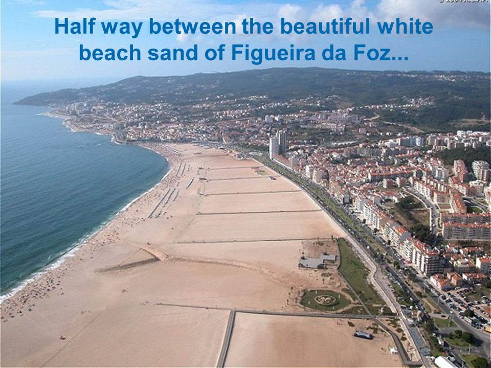 Half way between the beautiful white beach sand of Figueira da Foz...