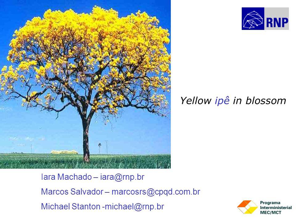 Iara Machado – iara@rnp.br Marcos Salvador – marcosrs@cpqd.com.br Michael Stanton -michael@rnp.br Yellow ipê in blossom
