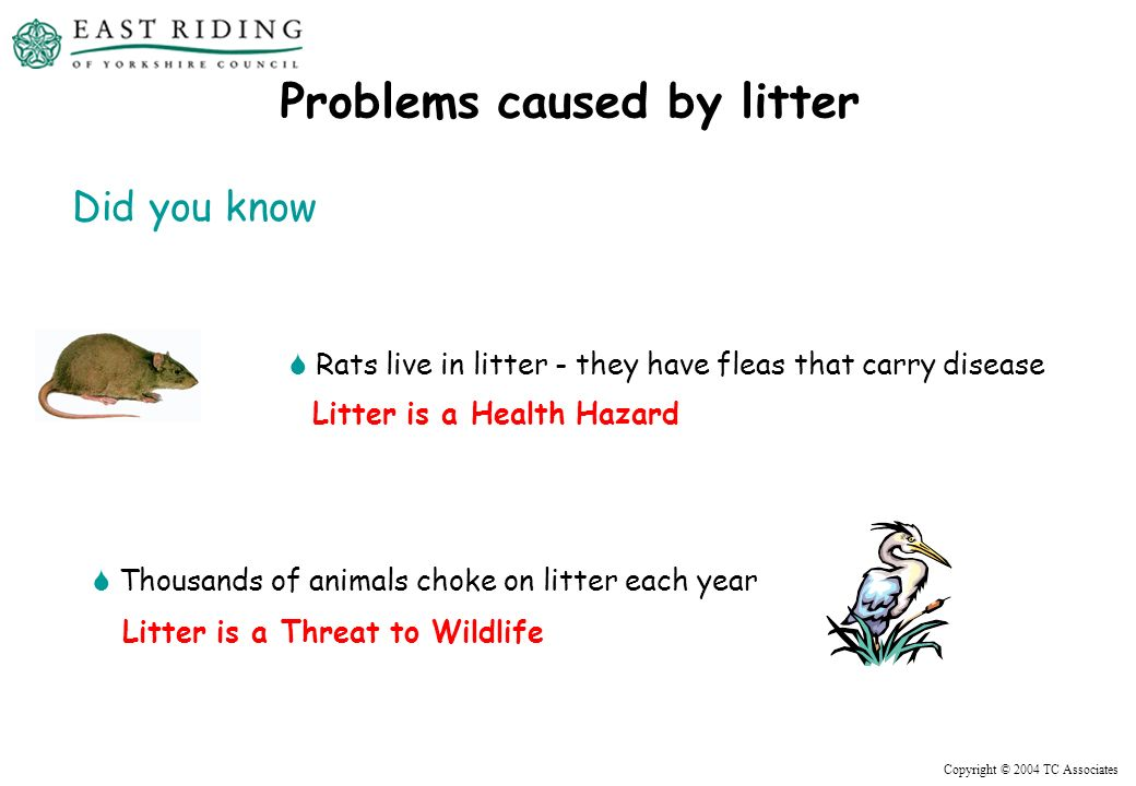 Copyright © 2004 TC Associates Rats live in litter - they have fleas that carry disease Thousands of animals choke on litter each year Problems caused by litter Did you know Litter is a Health Hazard Litter is a Threat to Wildlife