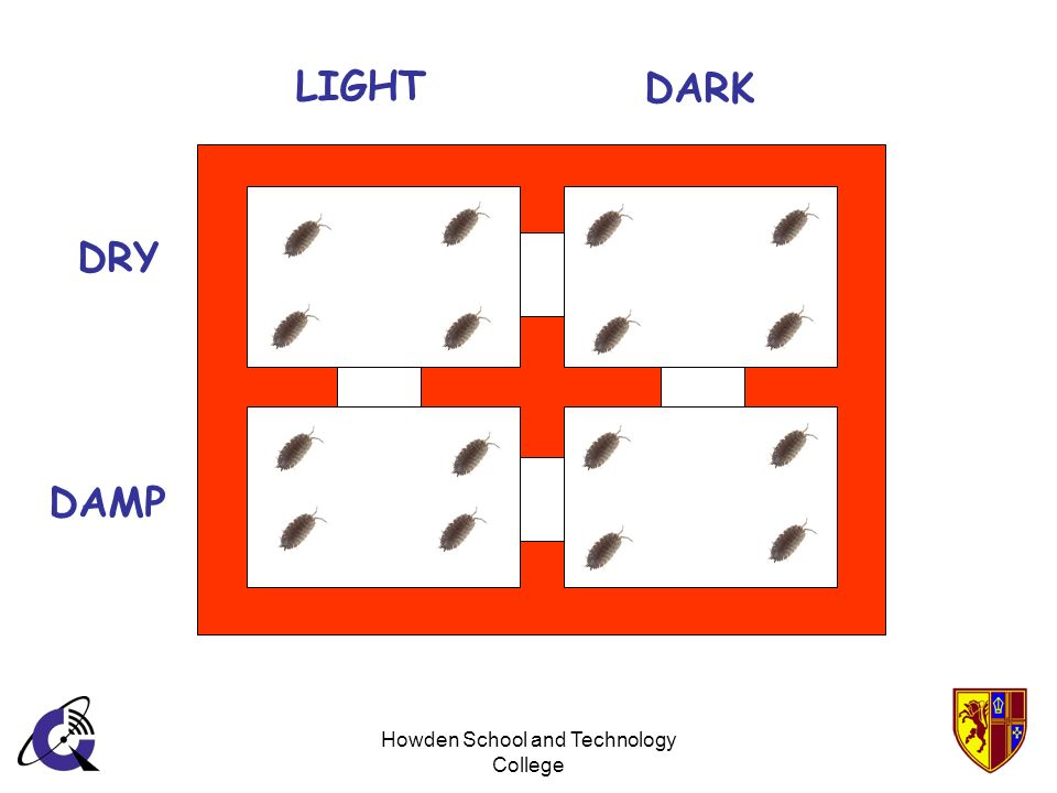 Howden School and Technology College LIGHT DARK DRY DAMP