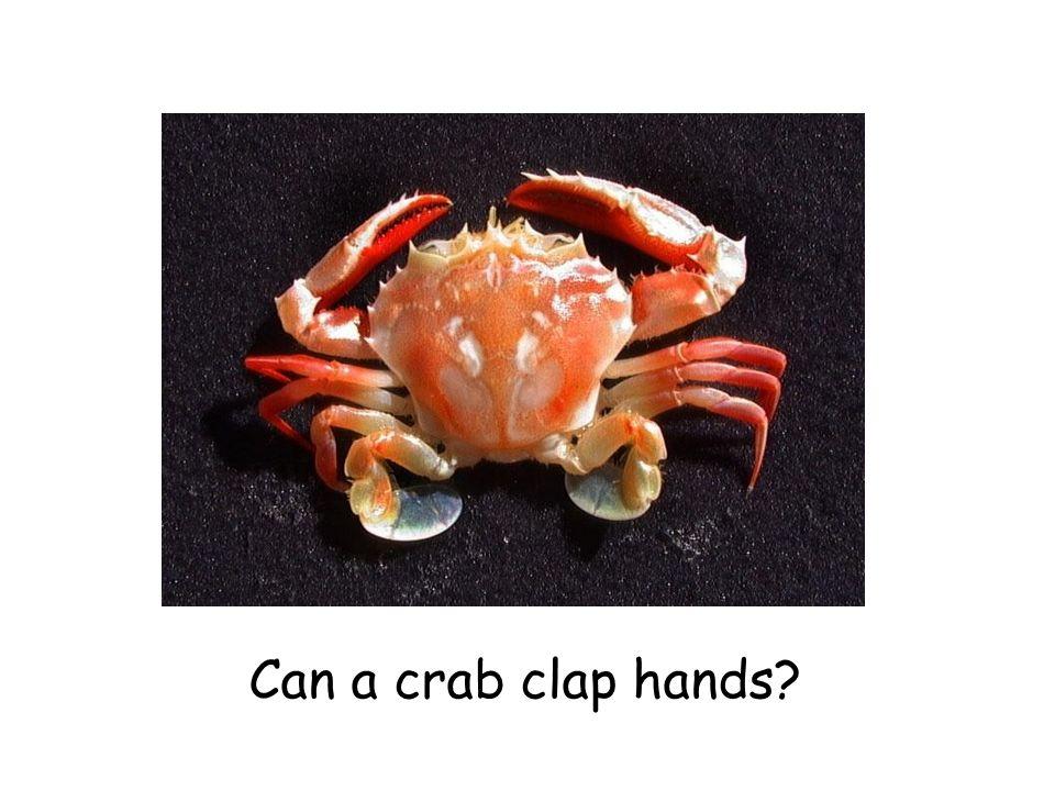 Can a crab clap hands?