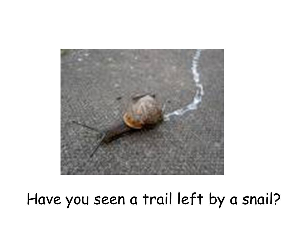 Have you seen a trail left by a snail?