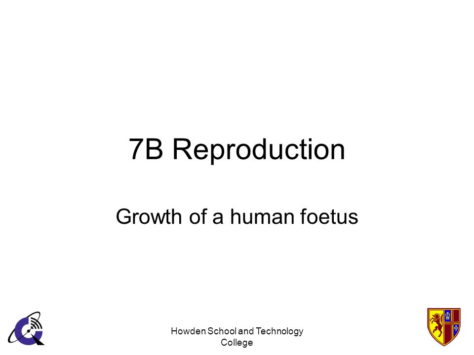Howden School and Technology College 7B Reproduction Growth of a human foetus