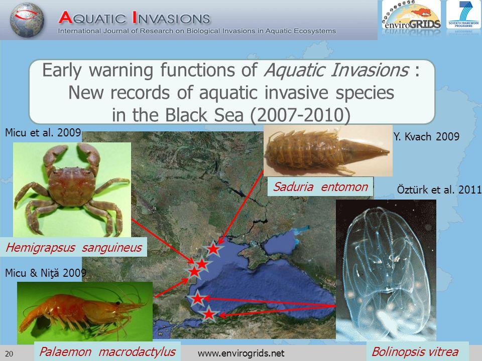 20 www.envirogrids.net Bolinopsis vitreaPalaemon macrodactylus Hemigrapsus sanguineus Saduria entomon Early warning functions of Aquatic Invasions : New records of aquatic invasive species in the Black Sea (2007-2010) Y.