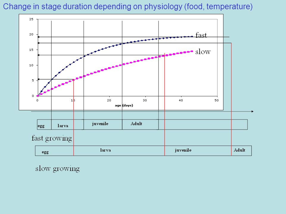Change in stage duration depending on physiology (food, temperature)
