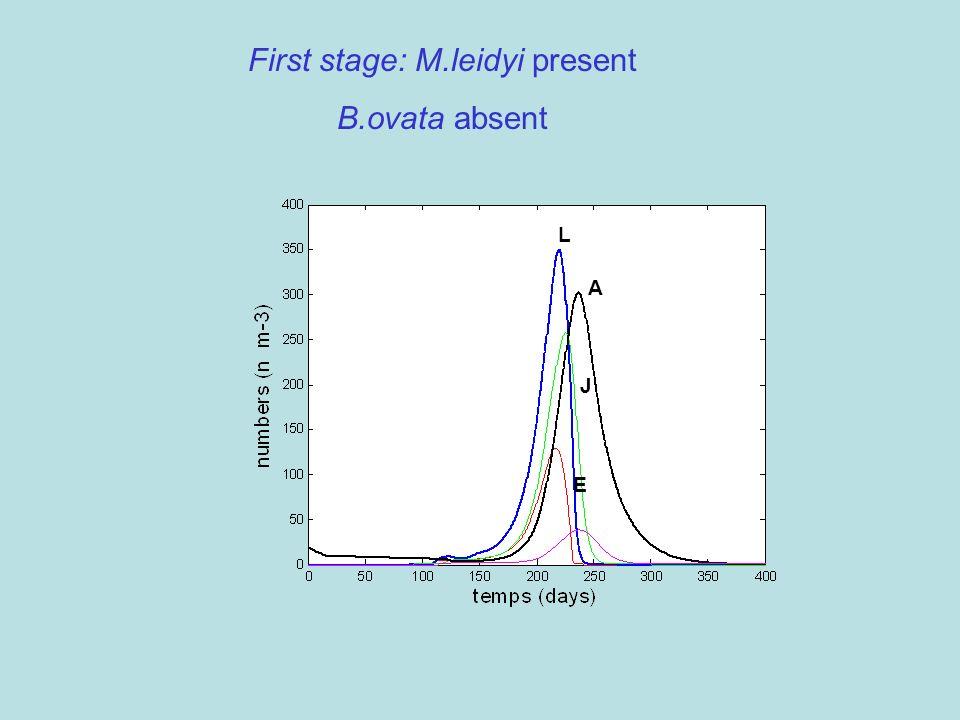 First stage: M.leidyi present B.ovata absent A L J E
