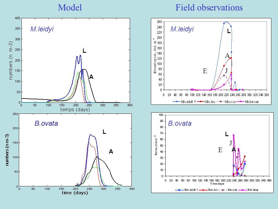 M.leidyi B.ovata A L A L ModelField observations M.leidyi B.ovata L J A L E A J E