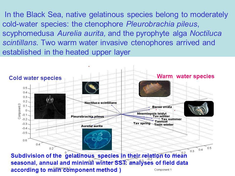 In the Black Sea, native gelatinous species belong to moderately cold-water species: the ctenophore Pleurobrachia pileus, scyphomedusa Aurelia aurita,