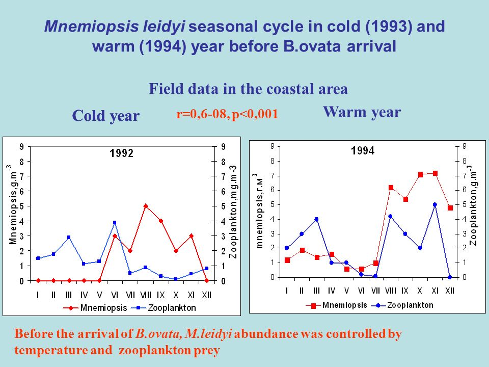 Mnemiopsis leidyi seasonal cycle in cold (1993) and warm (1994) year before B.ovata arrival Field data in the coastal area r=0,6-08, p<0,001 Cold year Warm year Before the arrival of B.ovata, M.leidyi abundance was controlled by temperature and zooplankton prey