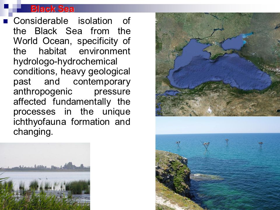Considerable isolation of the Black Sea from the World Ocean, specificity of the habitat environment hydrologo-hydrochemical conditions, heavy geologi