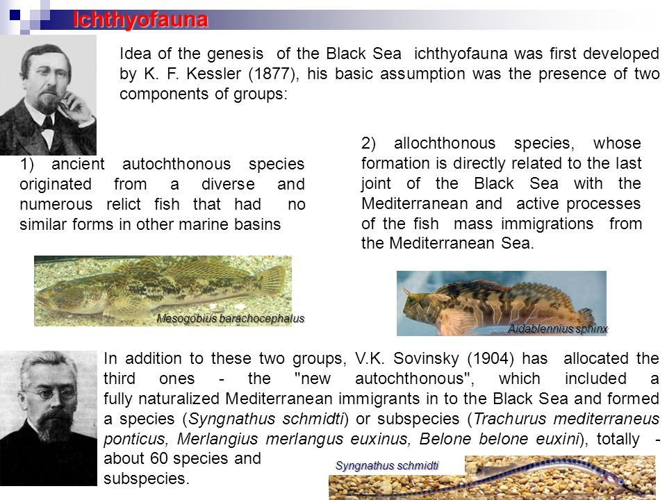 1) ancient autochthonous species originated from a diverse and numerous relict fish that had no similar forms in other marine basins Idea of the genes