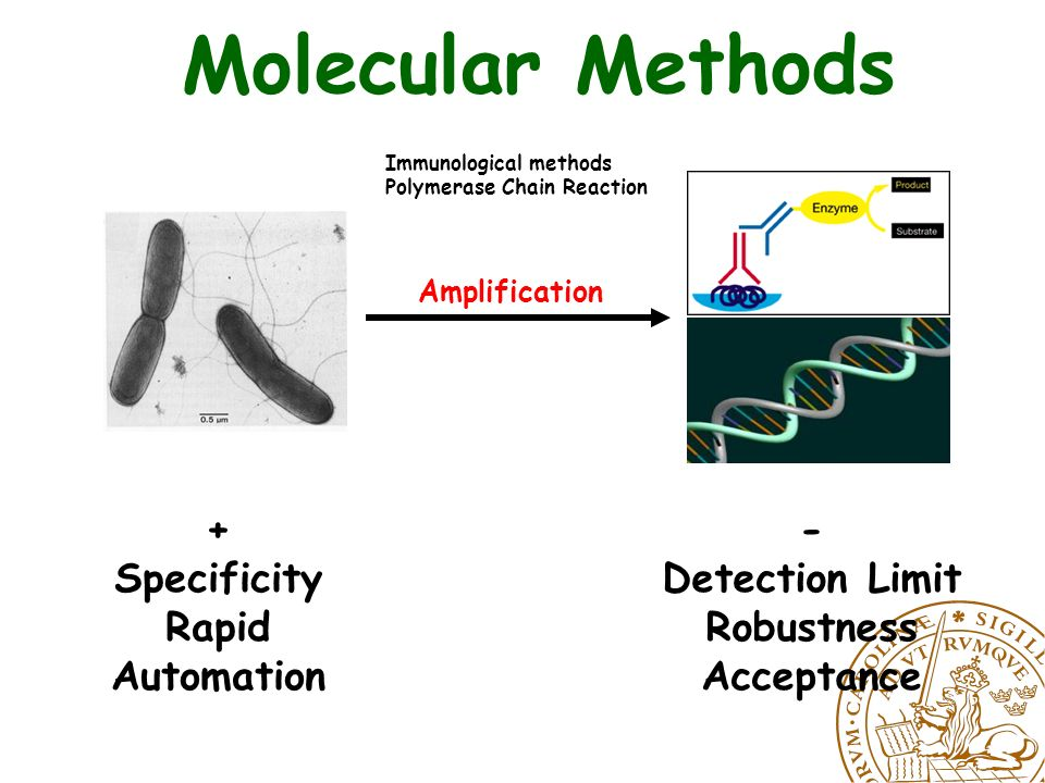 Amplification Molecular Methods + Specificity Rapid Automation - Detection Limit Robustness Acceptance Immunological methods Polymerase Chain Reaction