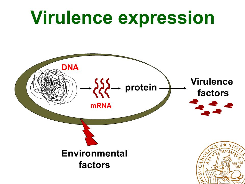 protein Virulence factors mRNA DNA Virulence expression Environmental factors