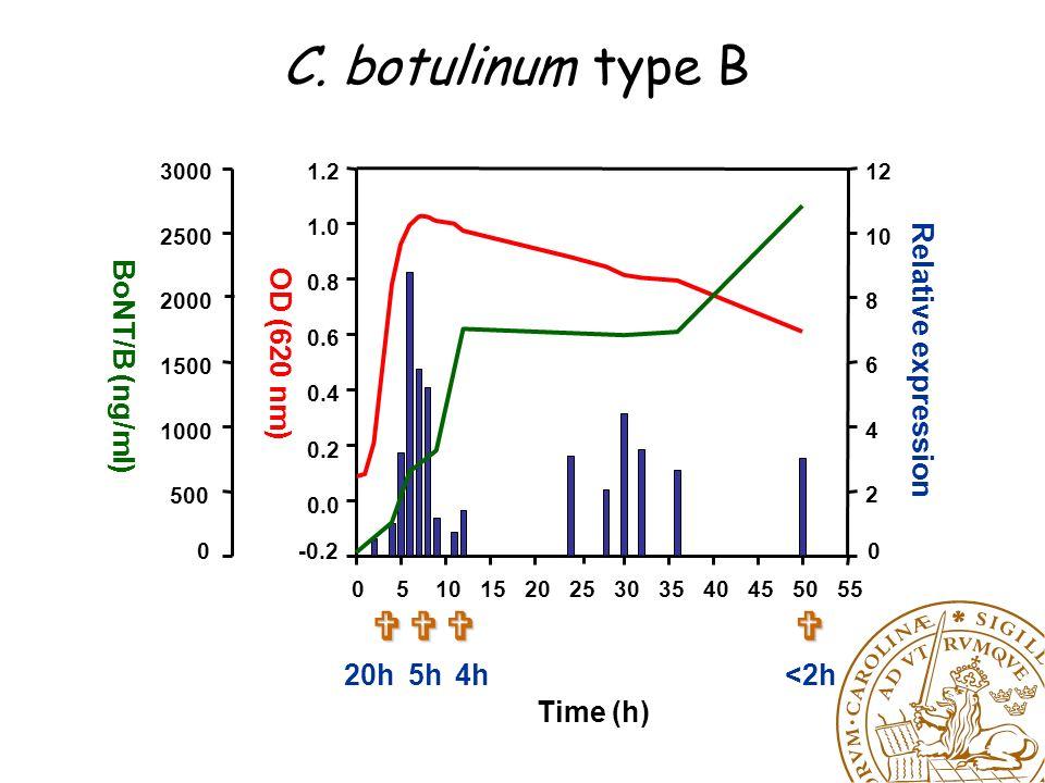 C. botulinum type B Time (h) 0510152025303540455055 OD (620 nm) -0.2 0.0 0.2 0.4 0.6 0.8 1.0 1.2 Relative expression 0 2 4 6 8 10 12 BoNT/B (ng/ml) 0