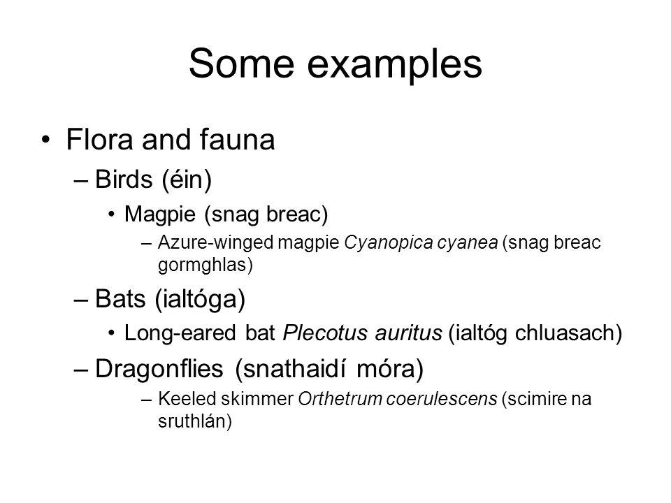 Some examples Flora and fauna –Birds (éin) Magpie (snag breac) –Azure-winged magpie Cyanopica cyanea (snag breac gormghlas) –Bats (ialtóga) Long-eared bat Plecotus auritus (ialtóg chluasach) –Dragonflies (snathaidí móra) –Keeled skimmer Orthetrum coerulescens (scimire na sruthlán)