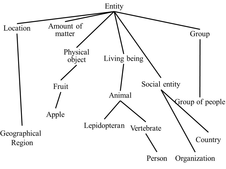Entity Physical object Amount of matter Group Organization Location Living being Person Animal Social entity Apple Fruit Group of people Vertebrate Country Geographical Region Lepidopteran