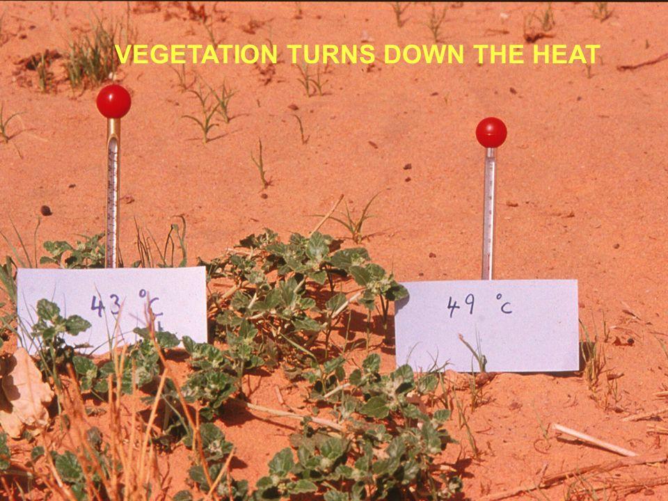 VEGETATION TURNS DOWN THE HEAT