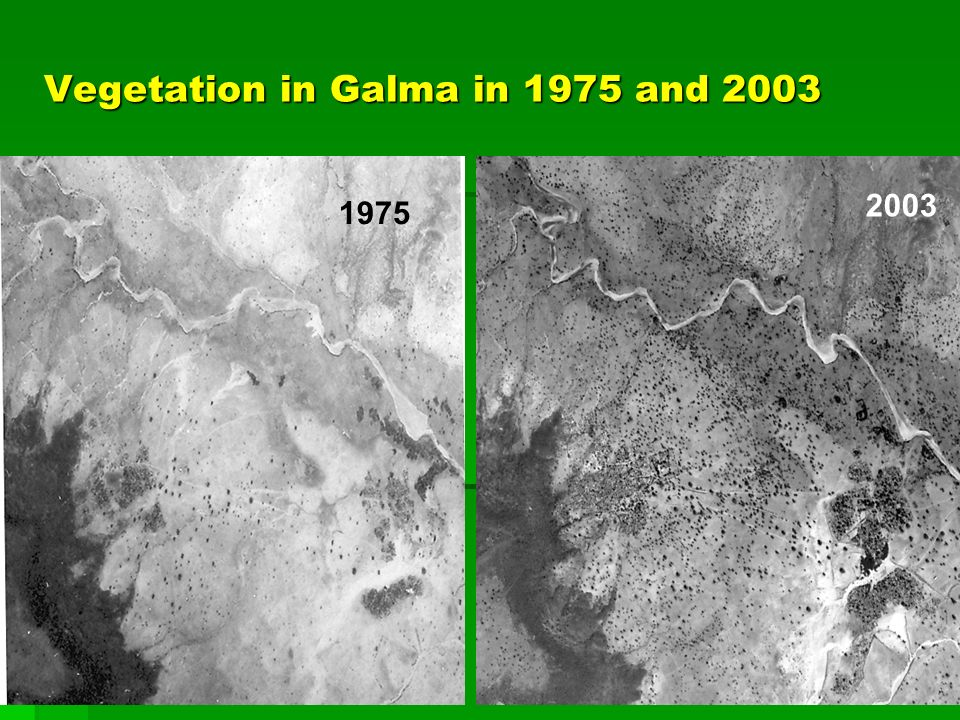 Vegetation in Galma in 1975 and 2003 1975 2003