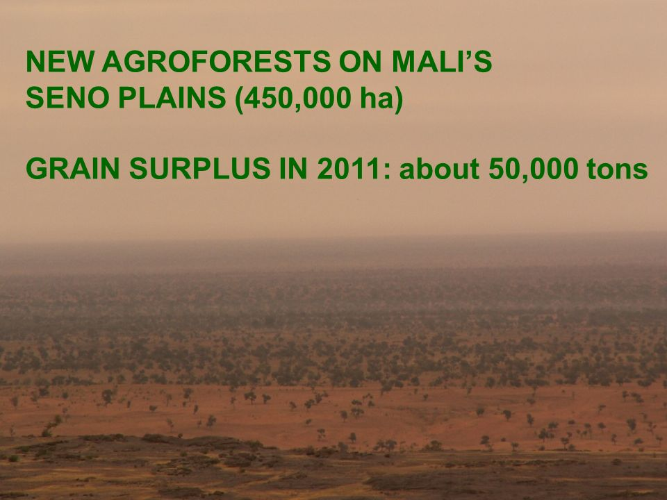 NEW AGROFORESTS ON MALIS SENO PLAINS (450,000 ha) GRAIN SURPLUS IN 2011: about 50,000 tons