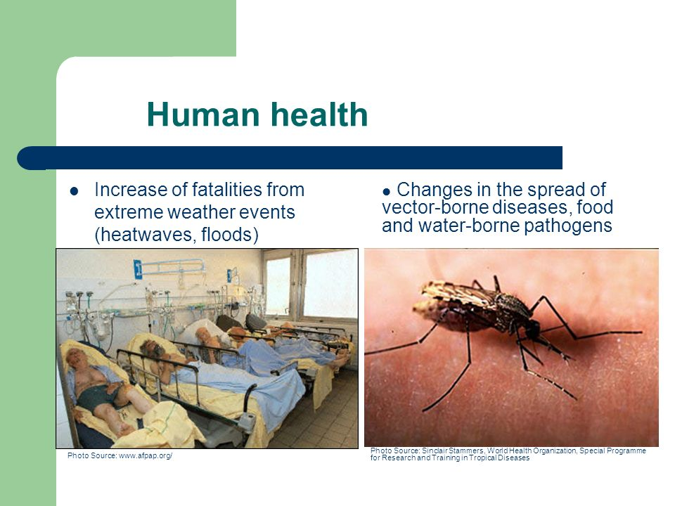Human health Increase of fatalities from extreme weather events (heatwaves, floods) Photo Source:   Changes in the spread of vector-borne diseases, food and water-borne pathogens Photo Source: Sinclair Stammers, World Health Organization, Special Programme for Research and Training in Tropical Diseases