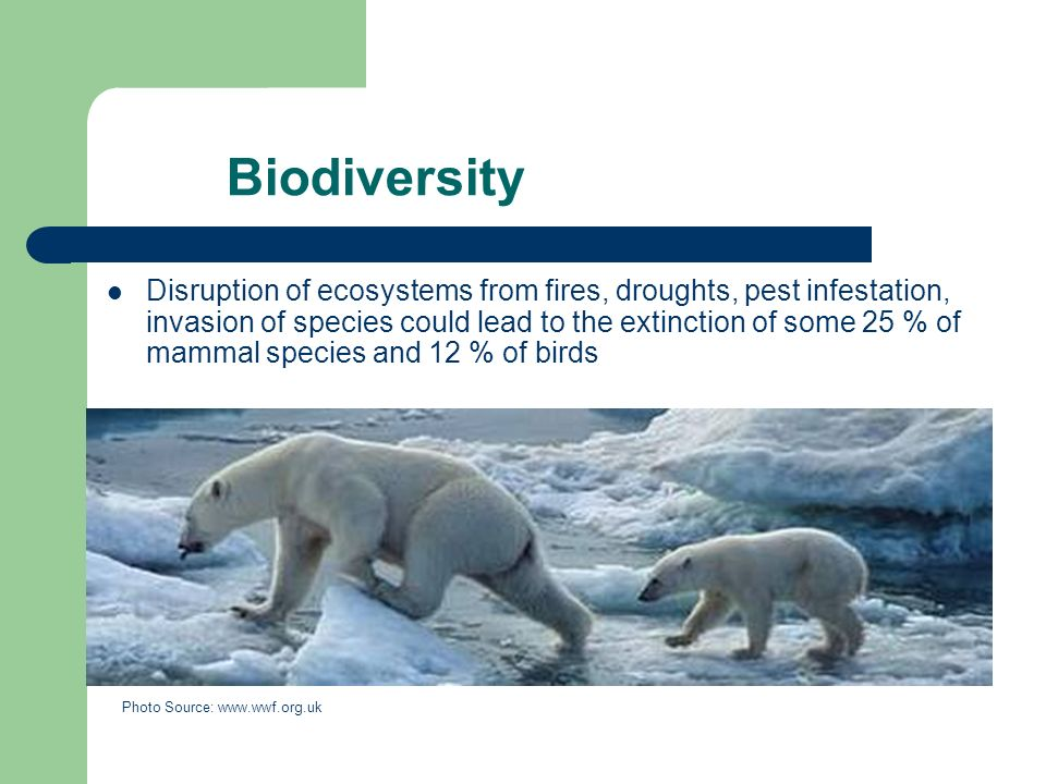 Biodiversity Disruption of ecosystems from fires, droughts, pest infestation, invasion of species could lead to the extinction of some 25 % of mammal species and 12 % of birds Photo Source:
