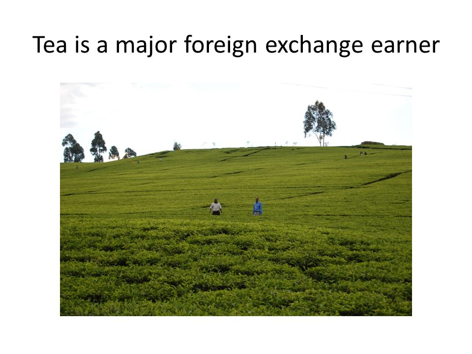Tea is a major foreign exchange earner