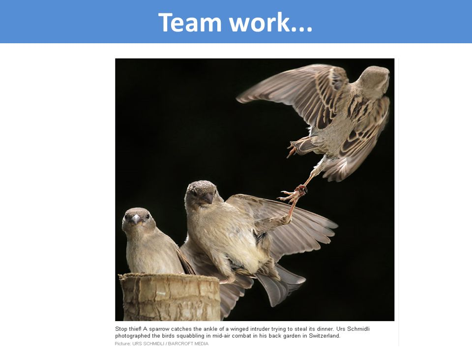 Team work...