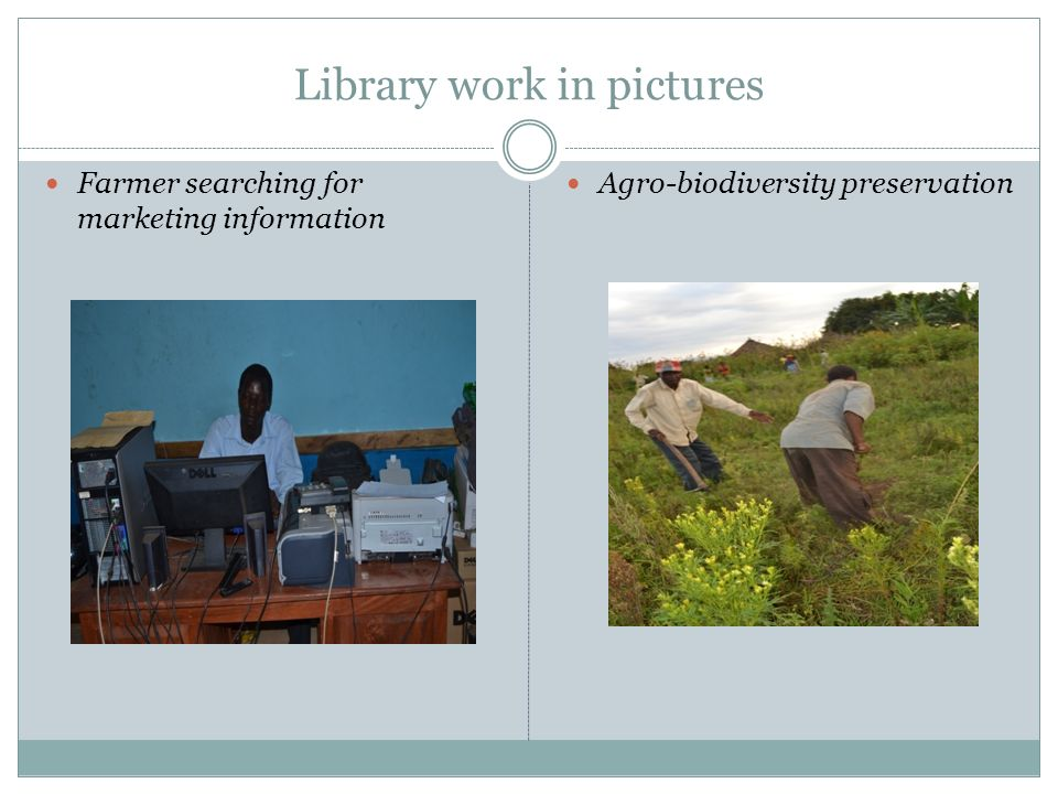 Library work in pictures Farmer searching for marketing information Agro-biodiversity preservation