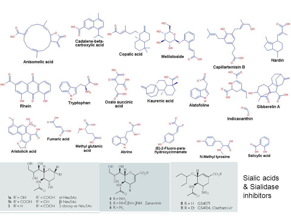 Sialic acids & Sialidase inhibitors