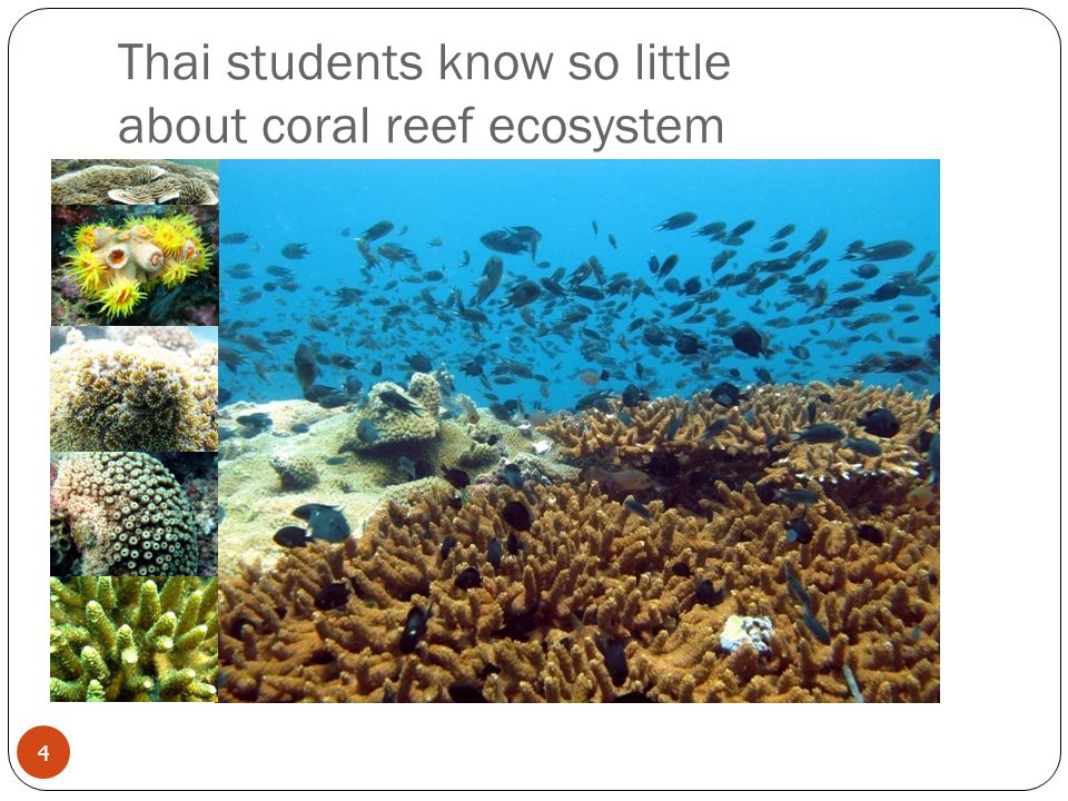 Thai students know so little about coral reef ecosystem 4