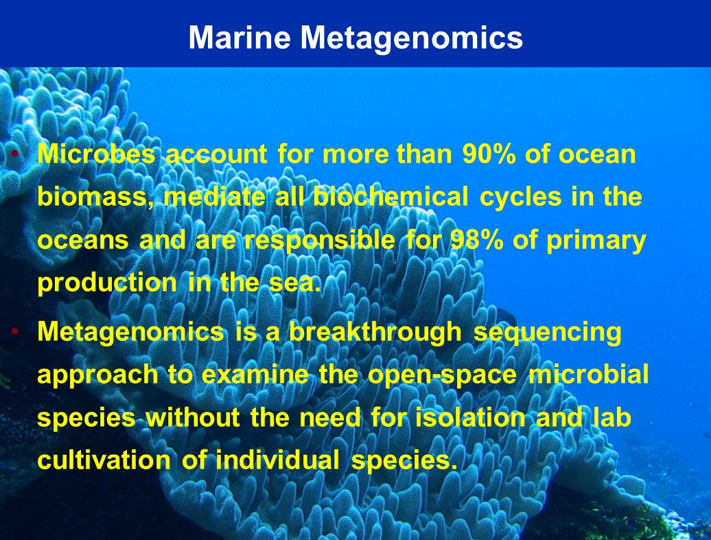 Marine Metagenomics Microbes account for more than 90% of ocean biomass, mediate all biochemical cycles in the oceans and are responsible for 98% of p