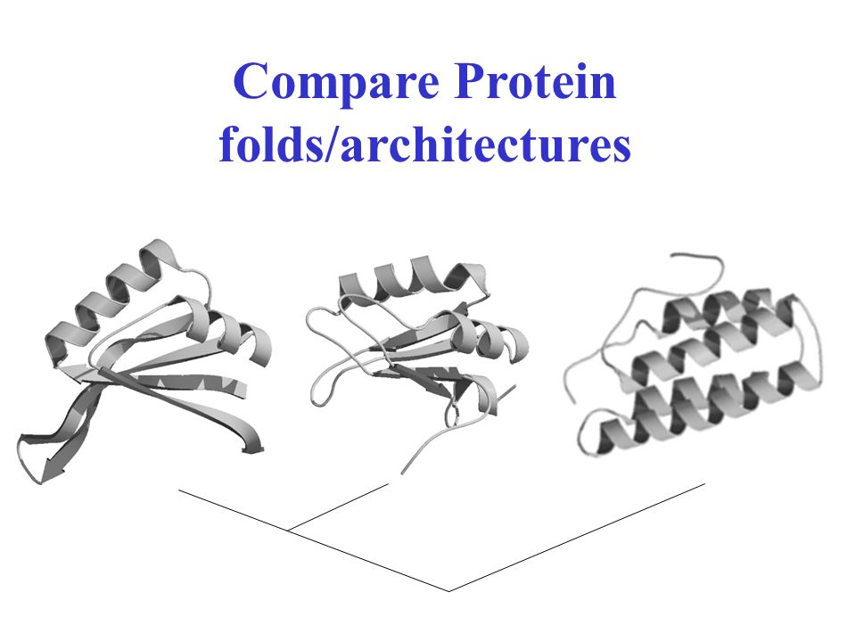 Compare Protein folds/architectures