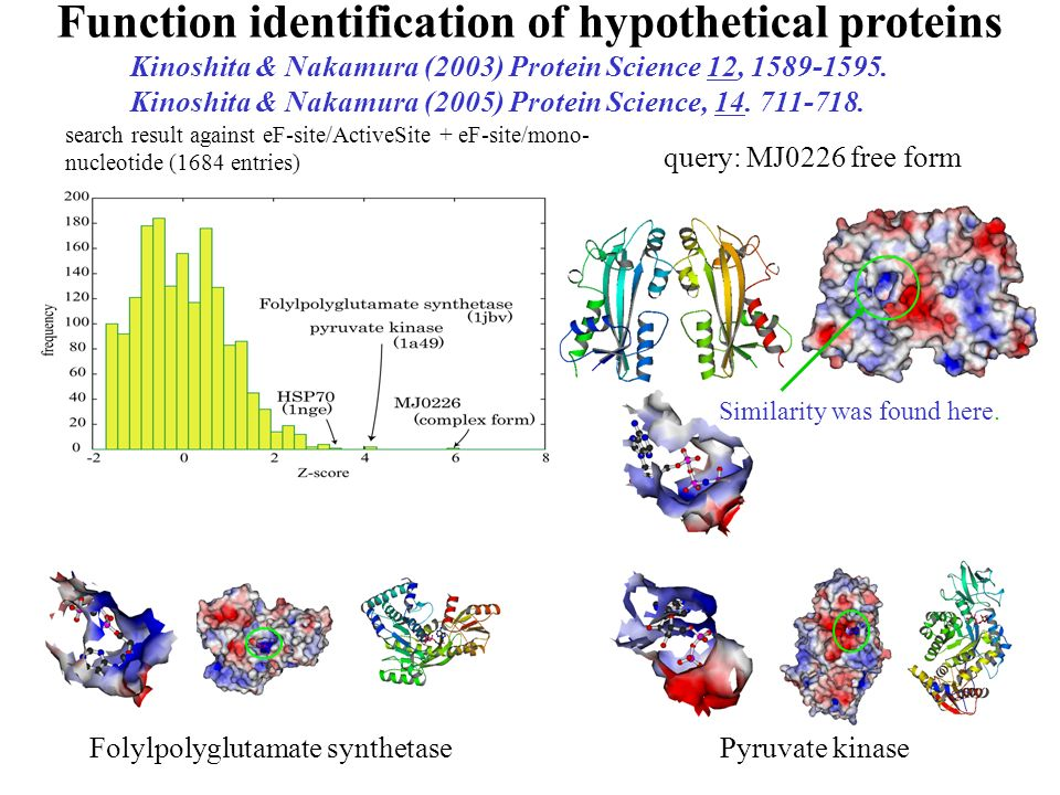 Folylpolyglutamate synthetase query: MJ0226 free form search result against eF-site/ActiveSite + eF-site/mono- nucleotide (1684 entries) Pyruvate kina
