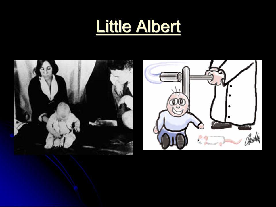 Little Albert Little Albert