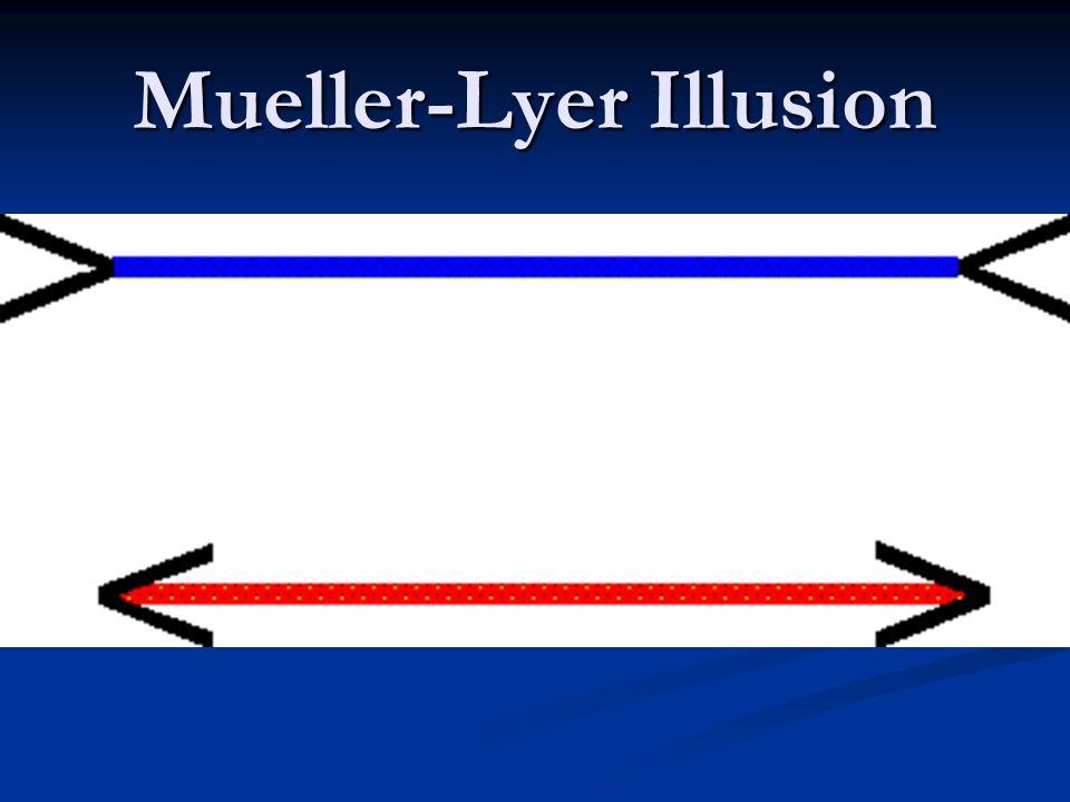 Mueller-Lyer Illusion