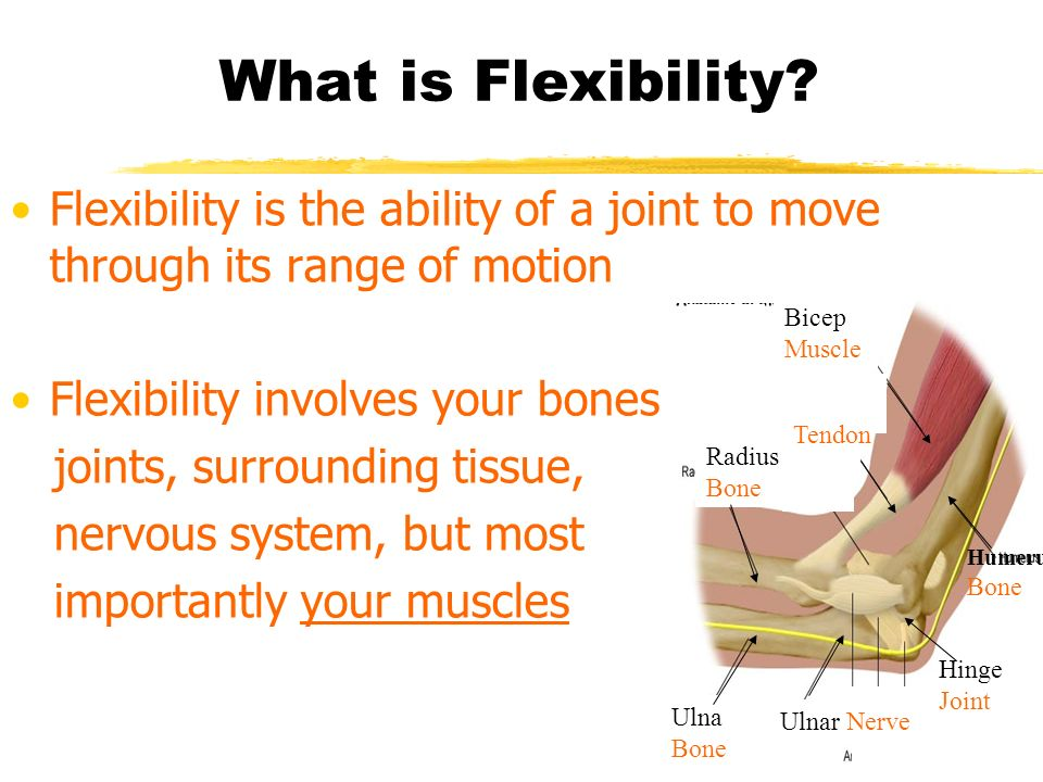 What is Flexibility? Flexibility is the ability of a joint to move through its range of motion Flexibility involves your bones, joints, surrounding ti