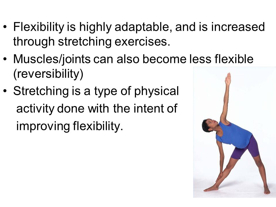 #3 Nervous System Activity Determines Flexibility Muscles contain stretch receptors that control their length When a muscle is first stretched, a reflex causes the muscle to contract, to resist the change in length.