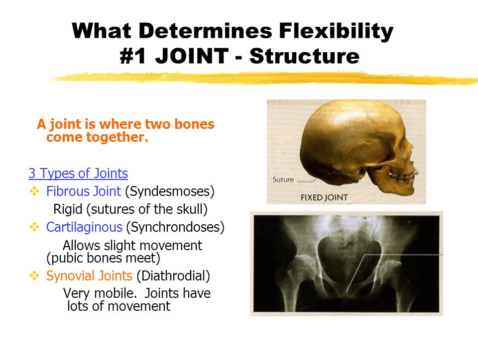 What Determines Flexibility #1 JOINT - Structure A joint is where two bones come together. 3 Types of Joints Fibrous Joint (Syndesmoses) Rigid (suture
