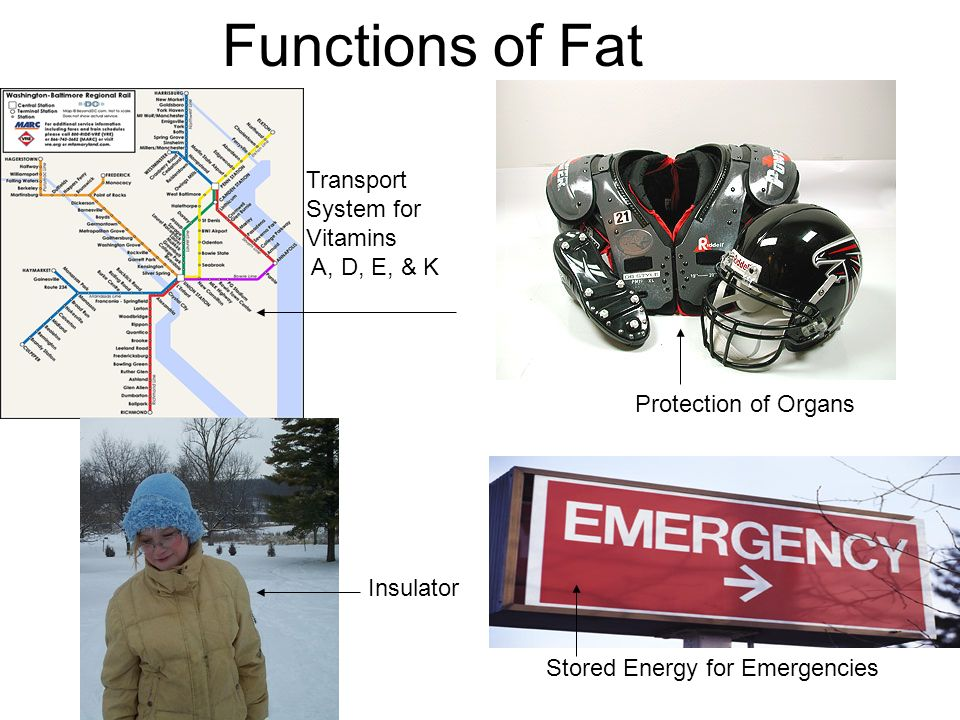 Functions of Fat Transport System for Vitamins A, D, E, & K Insulator Protection of Organs Stored Energy for Emergencies