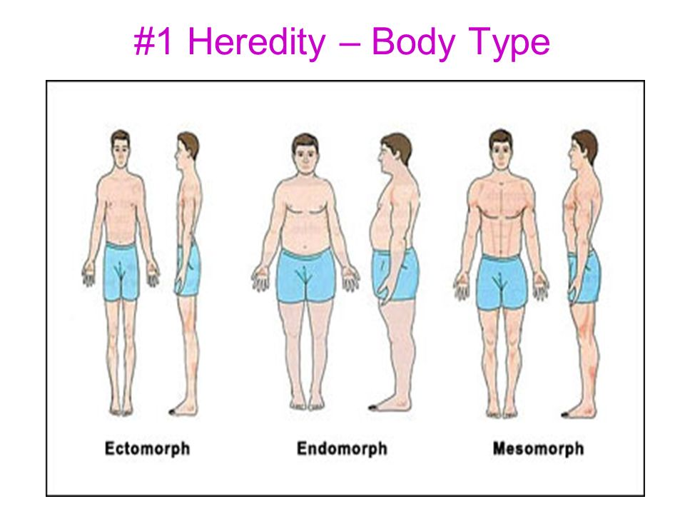 Thin High Metabolism Flat Chest Has trouble gaining weight Delicate Build Small amount of muscle mass Low body-fat % Round shaped Slow metabolism Soft body Trouble losing weight High body-fat% Underdeveloped muscles Medium to large bone size Gains or loses weight easily Low-to-medium body fat% Large amount of muscle mass Medium to high metabolism What is Your Body Type?