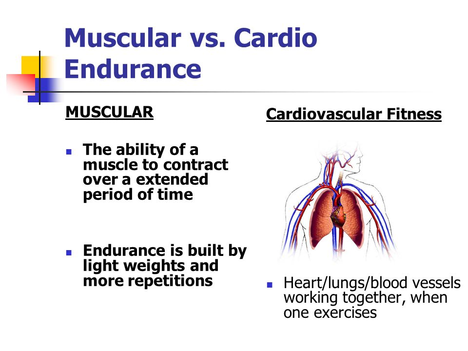 Muscular vs. Cardio Endurance MUSCULAR The ability of a muscle to contract over a extended period of time Endurance is built by light weights and more