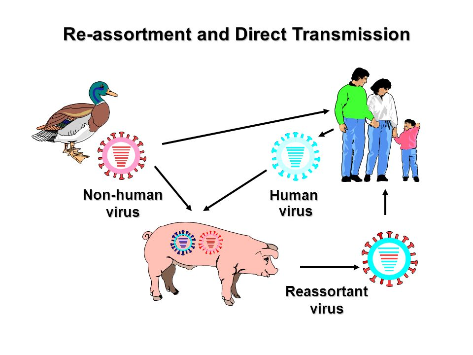 Re-assortment and Direct Transmission Human virus virus Reassortantvirus Non-humanvirus