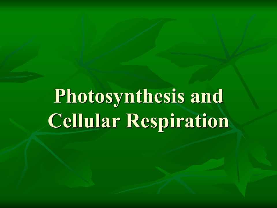 Cellular Respiration Overview Depends on whether or not there is oxygen Aero = oxygen Aerobic Respiration – makes energy Anaerobic Respiration – Fermentation (makes alcohol)