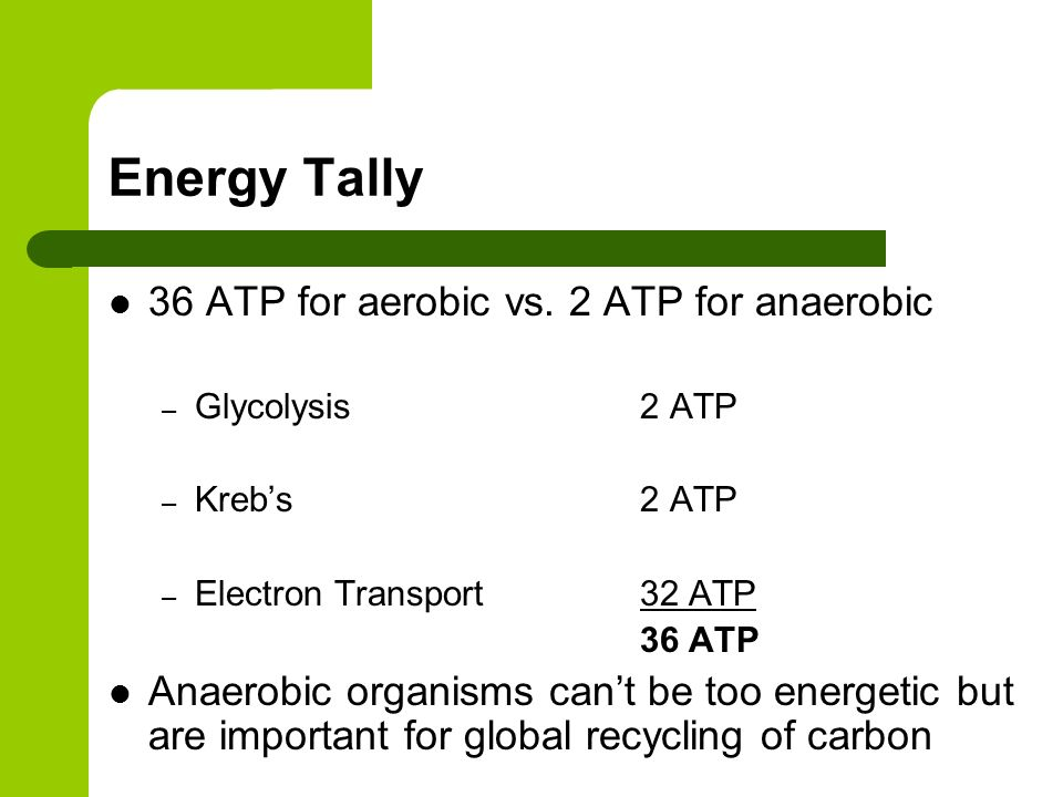 Energy Tally 36 ATP for aerobic vs. 2 ATP for anaerobic – Glycolysis 2 ATP – Krebs 2 ATP – Electron Transport32 ATP 36 ATP Anaerobic organisms cant be