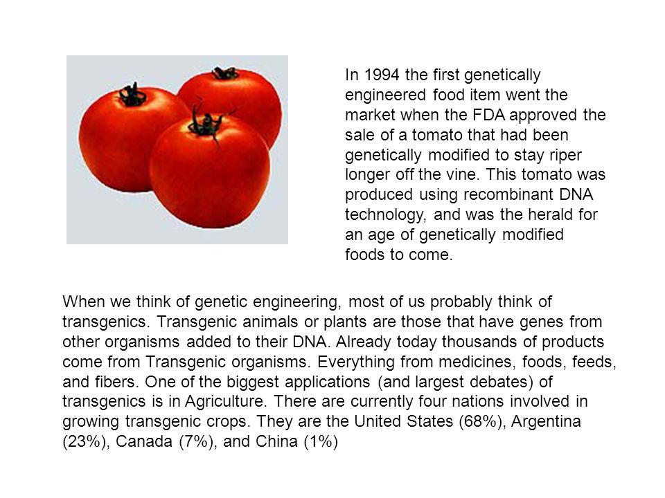 In 1994 the first genetically engineered food item went the market when the FDA approved the sale of a tomato that had been genetically modified to st